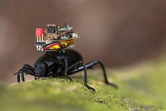 دوربینی که دنیا را از دید سوسک ها نشان می دهد!
