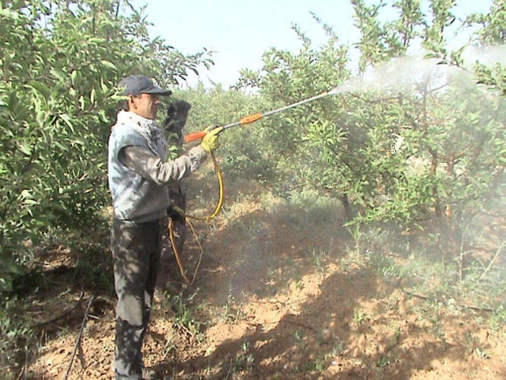 خبرنگاران تغییرات اقلیمی مبارزه با آفات باغی در مازندران را جلو انداخت