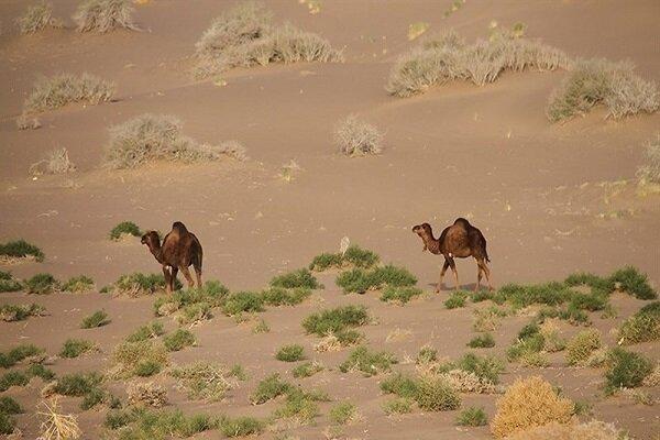طبیعت گردی در شهرستان سرایان